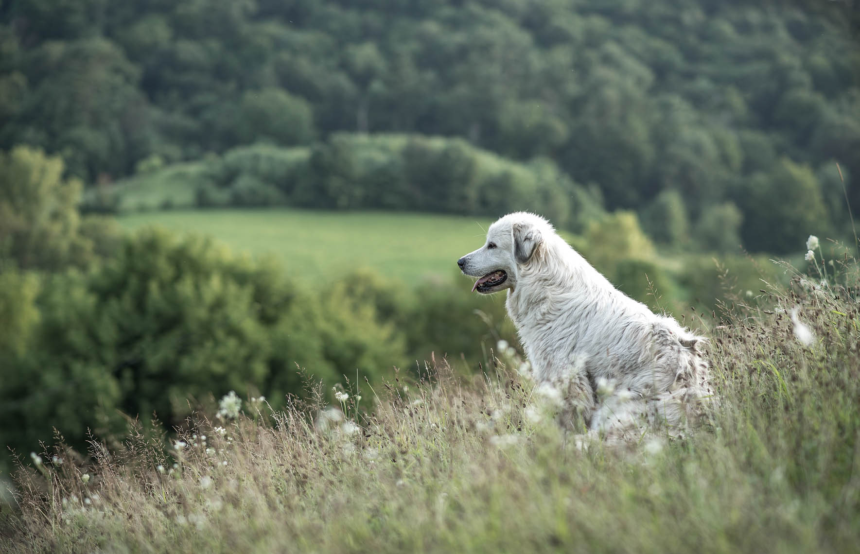 Dog on Hillside