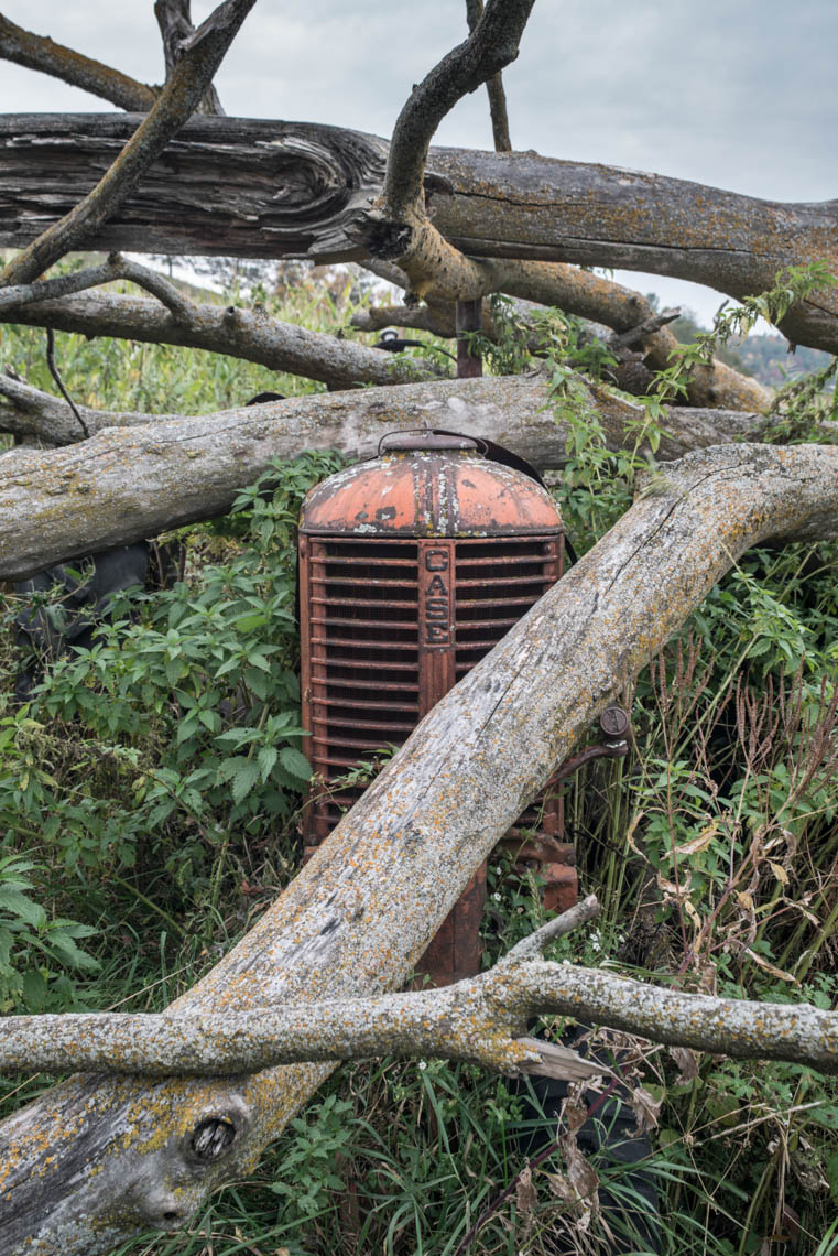 Case Tractor and Fallen Trees