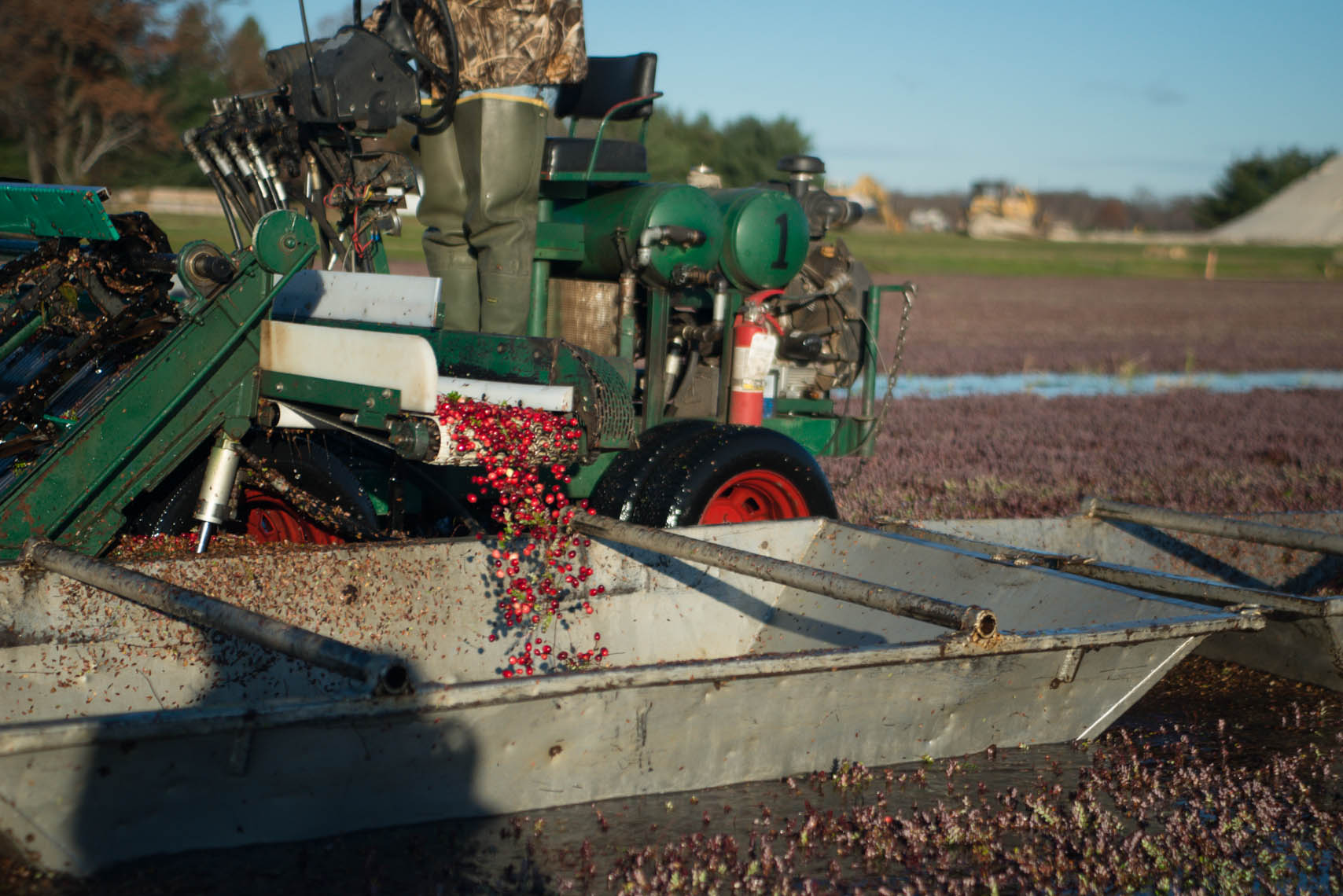 20141028_Hablemans Cranberry farm_PJO5319
