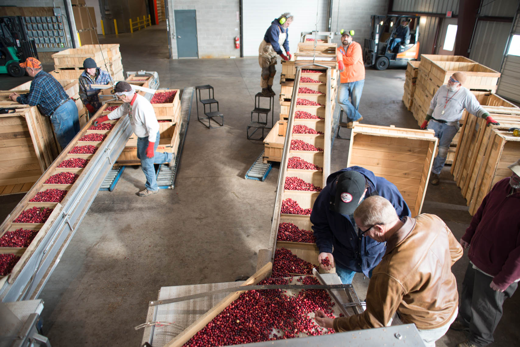 20141028_Hablemans Cranberry farm_PJO5621